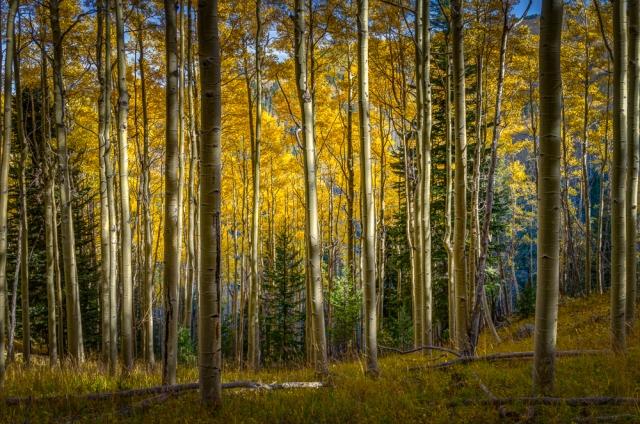 Fall Morning, Sangre De Christo Mountains-